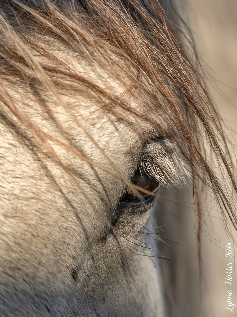 Can you brush the hair out of my eyes, please? by lynne5477