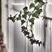 Ivy by rosiekerr