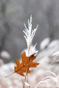 8th Nov 2014 - Winter Starting / Fall Ending!