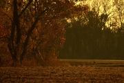7th Nov 2014 - Little Buck, Big Tree