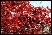8th Nov 2014 - Red