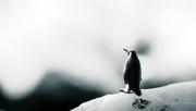 20th Oct 2014 - memories of antarctica