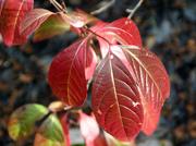 9th Nov 2014 - Fall Colour