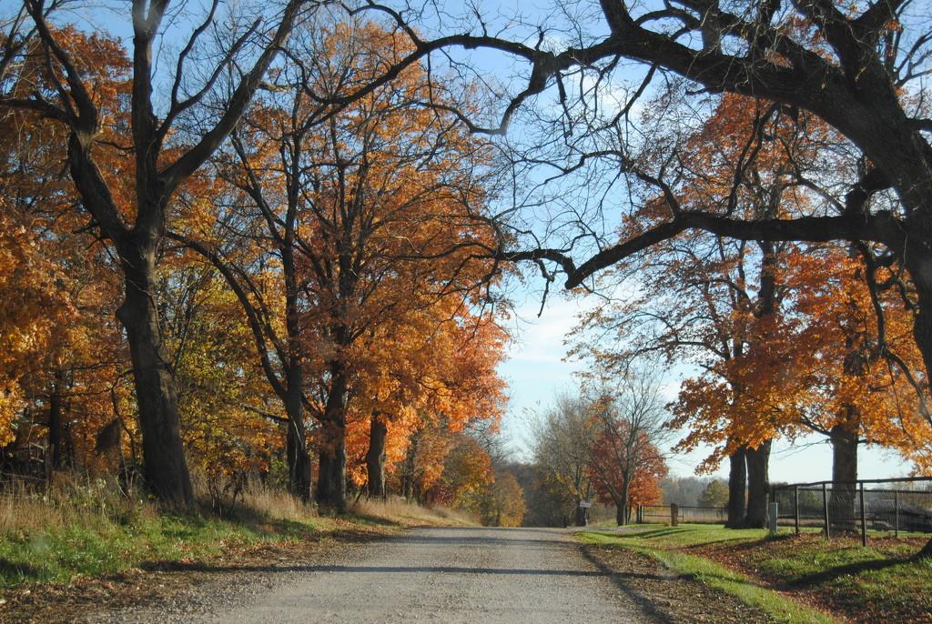 Take Me Home, Country Roads by genealogygenie