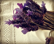 10th Nov 2014 - Just a little lavender