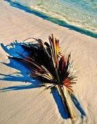 11th Nov 2014 - Palm frond