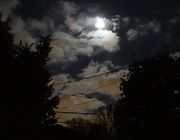 8th Nov 2014 - Moon Lit