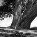 Tree Again by yaorenliu