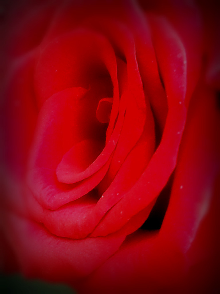 In the folds... by amrita21