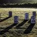 Veterans remembered by joansmor
