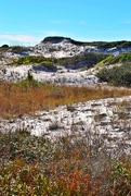 12th Nov 2014 - Sand dune, Grayton Beach State Park