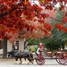Horses and Carriage  by khawbecker