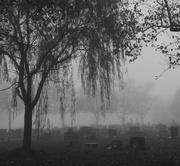 12th Nov 2014 - foggy day
