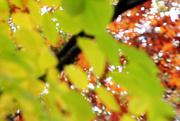 11th Nov 2014 - ICM - Leaves