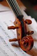 12th Nov 2014 - Violin Scroll