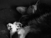 12th Nov 2014 - Catnap