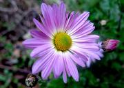12th Nov 2014 - Still some flowers bloom!