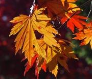 12th Nov 2014 - Autumn Light