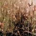 Moss by shepherdmanswife