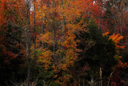 13th Nov 2014 - Soaking Up the Fall Color