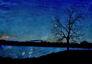 14th Nov 2014 - Alone Tree is Feeling Blue
