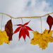 Hanging On To Fall