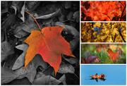 15th Nov 2014 - An Autumn Rainbow