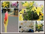 15th Nov 2014 - Flowers Everywhere