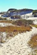 16th Nov 2014 - Sand dunes nature trail