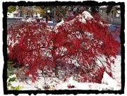 15th Nov 2014 - Fall Winter Tug Of War