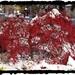 Fall Winter Tug Of War by brillomick