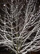 5th Nov 2014 - Tree skeleton take 2