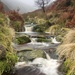 Blackden Brook... by shepherdmanswife