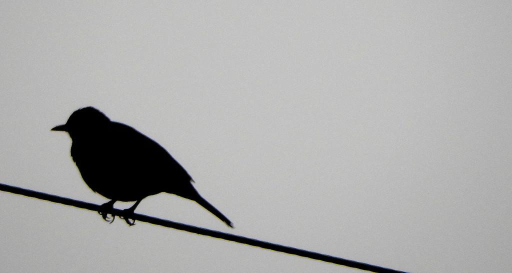 Bird on a wire. by snowy