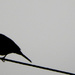 Bird on a wire. by snowy