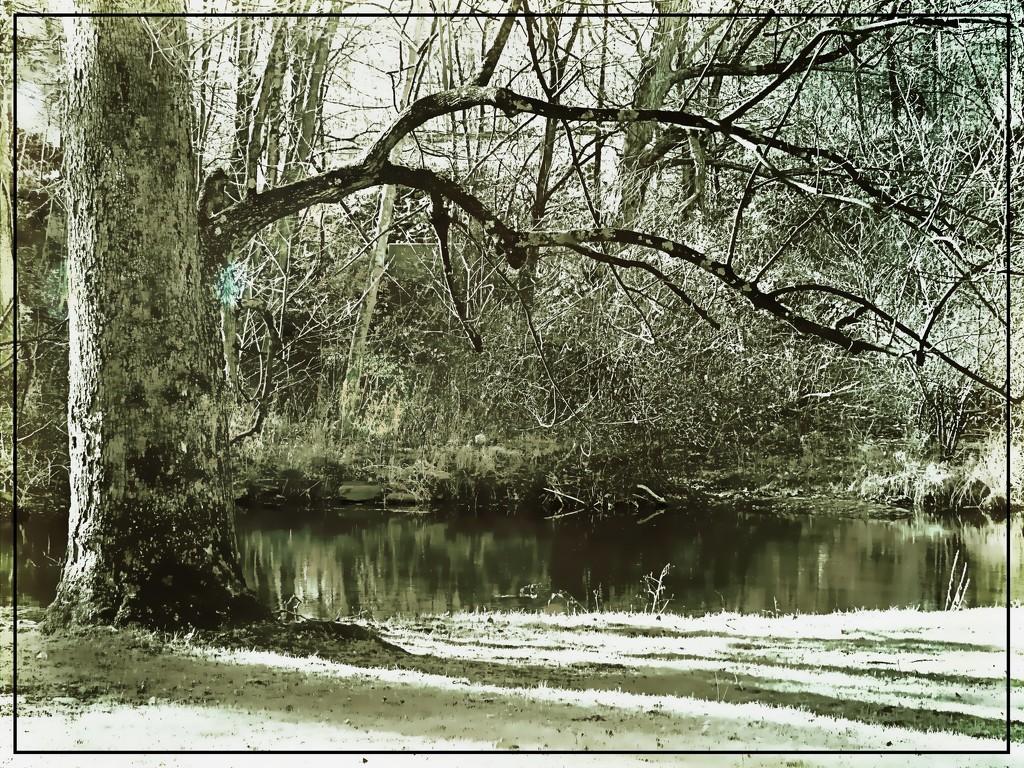 Landscape- Outdoor 6 by olivetreeann