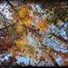Autumn Sky! by homeschoolmom
