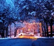 16th Nov 2014 - First Snow