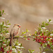 Mrs. Cardinal by lstasel