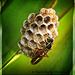 Wasp by rustymonkey