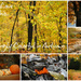 Amazing Autumn in Ohio Ad by alophoto