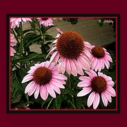 16th Nov 2014 - Late Bloomers
