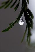 17th Nov 2014 - Frozen Droplet!