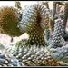 Creepy cactus. by 777margo