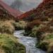 Wet Misty Weather... by shepherdmanswife