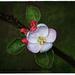 Spring blossom by rustymonkey