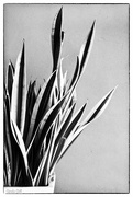 18th Nov 2014 - Black and White