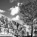 Tree Wall Shadow! by ukandie1