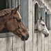 Future Showjumpers: contemplating glories to come. by vignouse