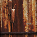 CatTails on a Rusty Tin Wall by lyndemc